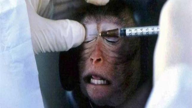 قرود تستجيب للقاح ضد كورونا.. مسؤول: النتائج تمنحنا الثقة بنجاحه على الإنسان